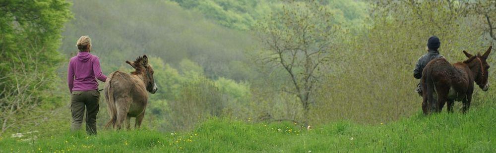 fp-1donkeys-walk-westley
